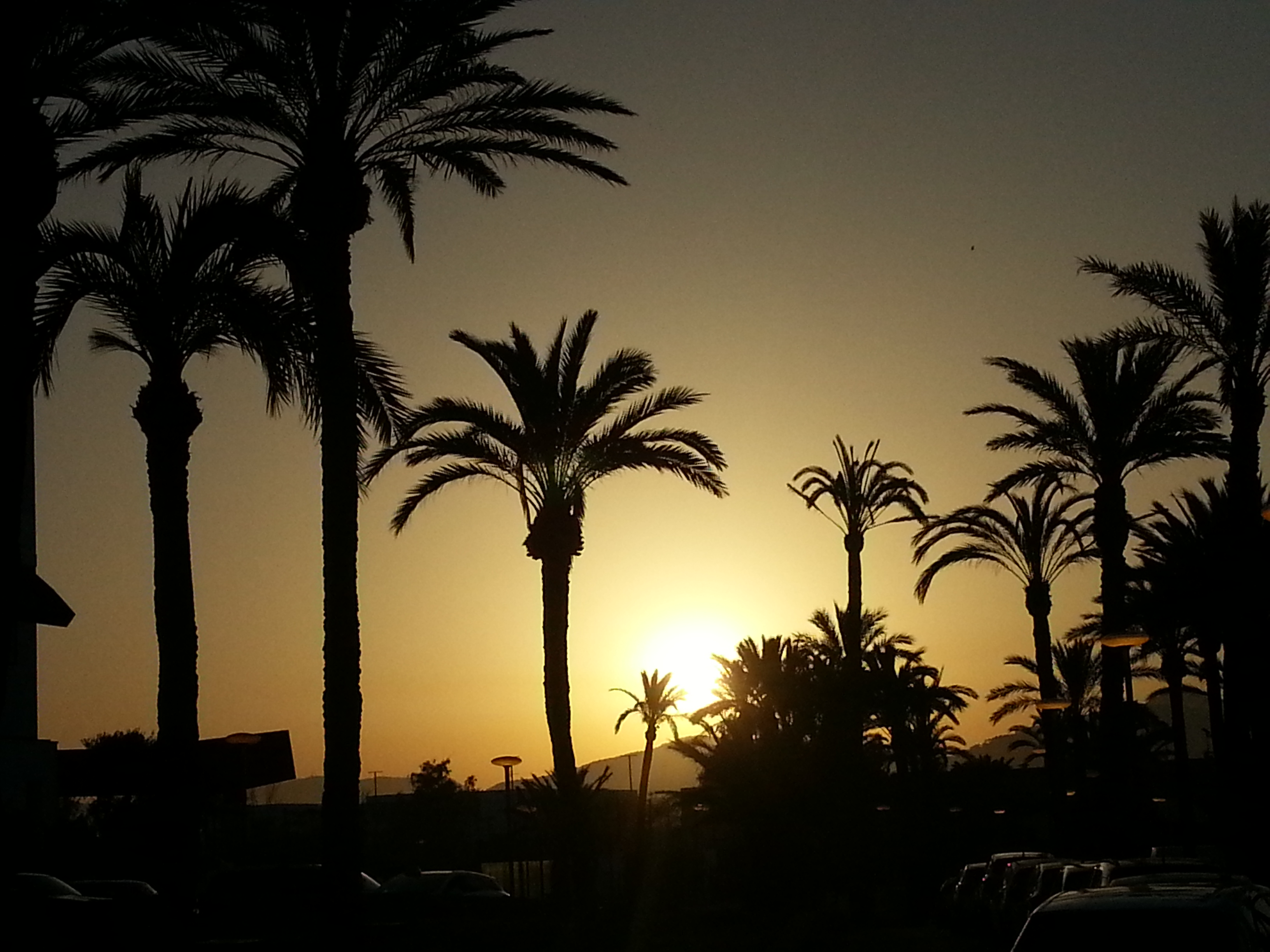 Ibiza 19 sunset palm trees